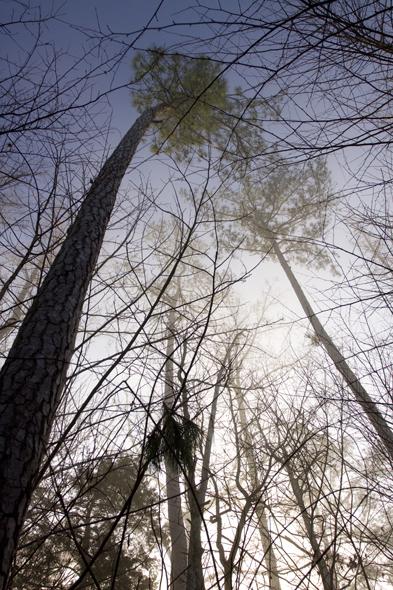 123109_trees04