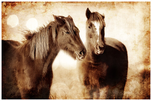 More_Horses-copy2