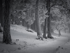 Winter II (Kim Ledin) Tags: trees winter snow cold beach fog strand vinter sweden sn eskilstuna trd dimma kallt sundbyhom