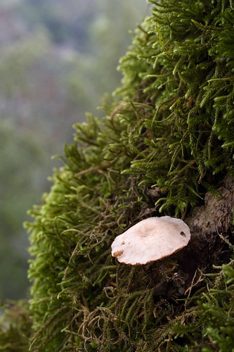 Fungi and Moss, Las Trampas, EBRPD