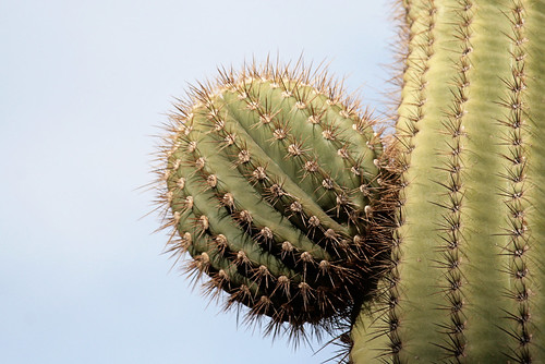 prickly ball.  haha