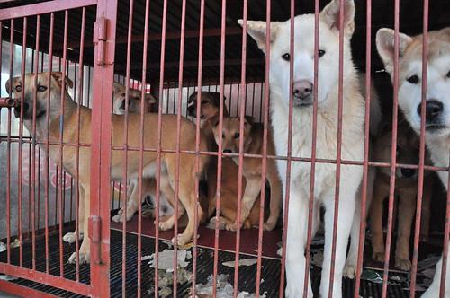 Gupo Market - Dog