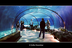 The Blue Tunnel (DolliaSH) Tags: ocean blue sea fish water glass zoo shark rotterdam topf50 starfish turtle tunnel explore lions sharks topf150 topf100 frontpage dierentuin oceanium diergaardeblijdorp 5000views 4000views explored visitholland canoneos50d colorphotoaward dollia 100commentgroup dollias sheombar dolliash haaientunnel