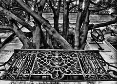 La casa del rbol (ByN) - The tree house (B&W) (celta4) Tags: house tree argentina casa buenosaires rbol