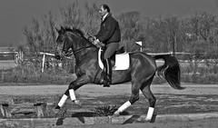 B&W (JUANLUBIS) Tags: horses horse sport canon caballo cheval caballos competition cavallo cavalo equestrian equine equus chevaux dressage equitation horserider galope domaclsica dressur equineart