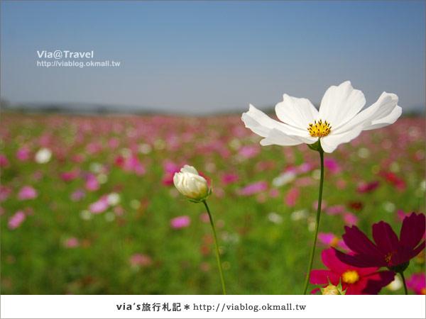 【2010春節旅遊】春節假期~南投市貓羅溪沙雕藝術節24