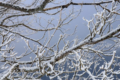 Winter (Pavel Vanik) Tags: winter tree nature canon eos czechrepublic bohemia 30d umava bohemianforest 1755is modrava