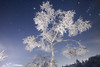 ☆Hoarfrost Queen (Ice dancing)☆ (masahiro miyasaka) Tags: blue winter mars white snow cold tree beautiful japan night canon stars outdoors star hoarfrost galaxy fantasy astrophotography orion oneshot icedancing iso6400 eos5dmarkⅱ tse17mmf4l primevalforestgroups