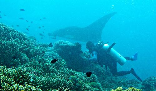 Flores Underwater 25
