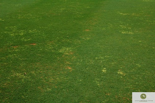 bermudagrass-white-leaf-fairway