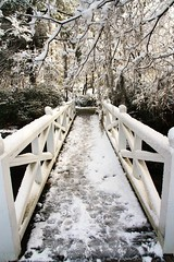 Icy Bridge (Daniela Duncan) Tags: winter snow cold sc canon way southcarolina woodenbridge forward summerville whitebridge rebelsxi bydanieladuncan icybridge