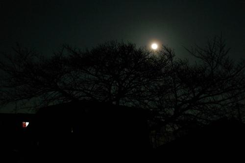 moon-tree100228