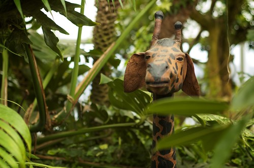 Jungle Giraffe