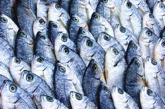 türkischer Markt 3 (stiller-weiter-tiefer) Tags: fisch augen markt fische