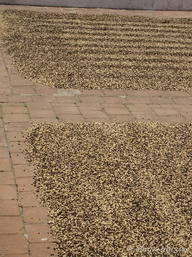 Coffee Plantation Tour (21)