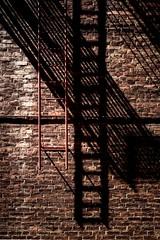 Wall and ladder (davidandsus) Tags: ladder brick wall dunedin shadow red brown
