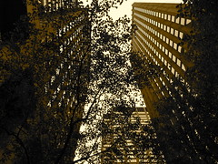 Outside MoMA (Fotis Korkokios) Tags: city nyc newyorkcity trees urban usa newyork tree america buildings manhattan unitedstatesofamerica bigapple urbanphotography urbanenvironment canon450d fostis canoneosdigitalrebelxsi fotiskorkokios