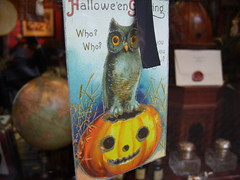 coy owl