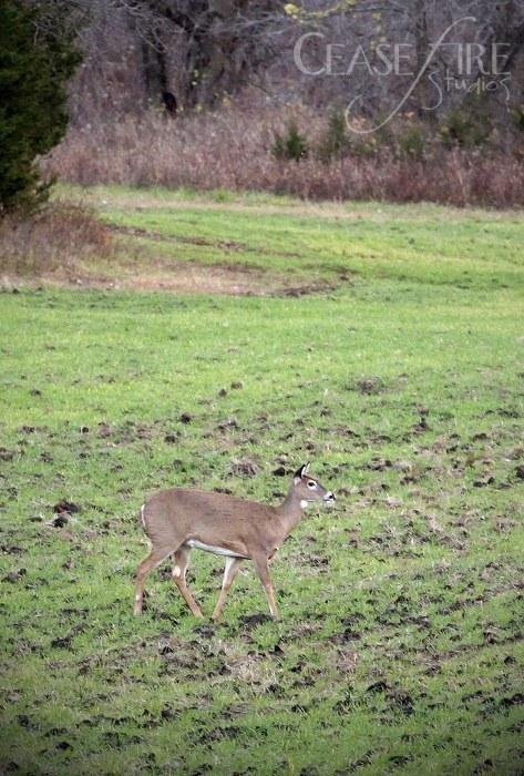 11-01-deer3