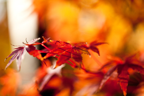 Autumn Leaves...