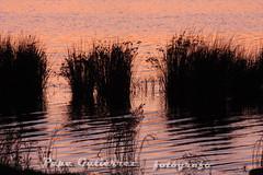 """RED WATER (CODIGO DE LUZ """"El Fotógrafo"""") Tags: portugal amanecer redwater laguna algarve vacaciones siluetas ondas reflejos guia albufera pepegutiérrez tff1 códigodeluz pgutiérrez"""