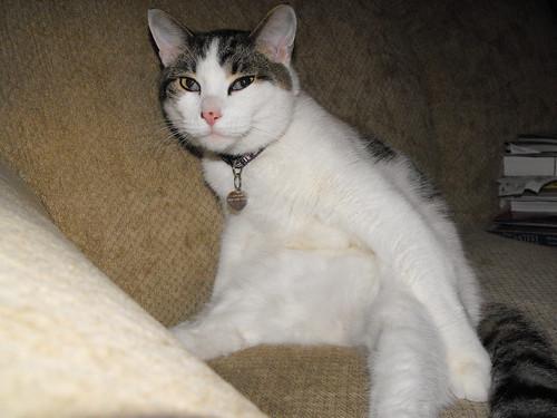 Victor Sitting