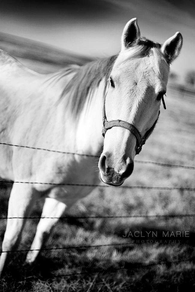 Salina, Kansas engagement portrait photography