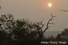ADS_000007423 (dickysingh) Tags: india sunrise landscape scenery outdoor scenic aditya ranthambore singh ranthambhore dicky adityasingh ranthamborebagh theranthambhorebagh wwwranthambhorecom