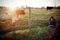 (shiphome) Tags: sunset film 35mm friend photographer cattle pasture freckles longhorn uga nikonfm2 dagmar athensga clarkecounty universityofgeoriga animalanddairyscience teamshipaway akamilkaway lomographyiso100