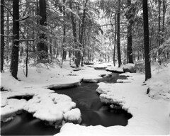 ID100-10-003 (Michael Costolo) Tags: winter forest town delta nh 4x5 brook milford tucker ddx