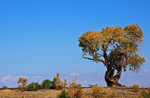 IMG_2265-w Tree