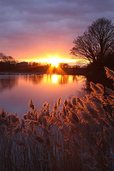 Reservoir Sunset (gracust) Tags: trees sunset sky sun water clouds reflections reeds evening buckinghamshire reservoir tring reflexions breathtaking marsworth thebestofday gnneniyisi breathtakinggoldaward breathtakinghalloffame