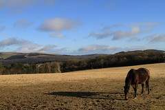 The Shadow (Chris*Bolton) Tags: morning light shadow sky horse field landscape scenery wicklow soe equine blueribbonwinner otw supershot rathdrum bej golddragon abigfave platinumphoto anawesomeshot diamondclassphotographer flickrdiamond citrit theunforgettablepictures ballinderry theperfectphotographer goldstaraward