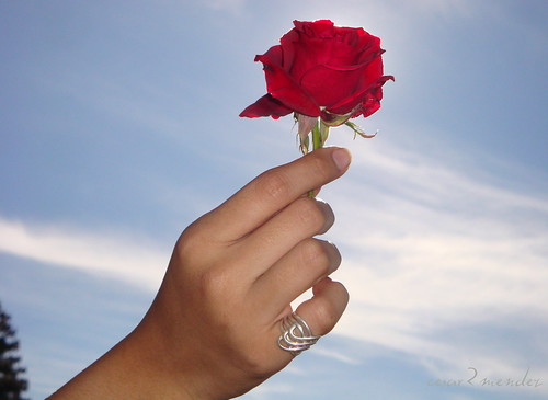 rosa rojaJPG by cesar2mendez.