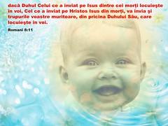 Romani 08-11 (Palosi Marton) Tags: kids childrens copii crestine versete biblice