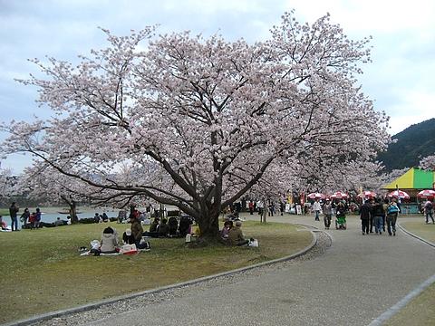 錦帯橋 花見4