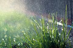 Nasser Freitag (~janne) Tags: grass fence wasser olympus gras friday zaun freitag janusz e520 ziob