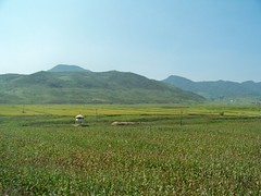 Fields of Corn and Rice in North Korea (Ray Cunningham) Tags: food tourism del countryside corn towers north guard korea tourist american crops agriculture norte corea dprk koryo 北朝鮮 корея 조선민주주의인민공화국 raycunningham zaruka raymondkcunninghamjr ©raymondkcunninghamjr northkoreanphotography raycunninghamnorthkoreanphotography dprkphotography