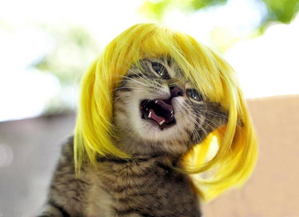 cat-glamour-08