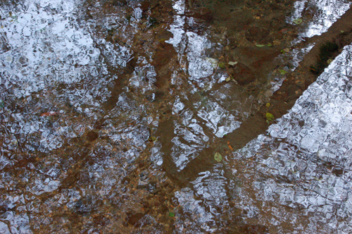 4a-trees-reflected-in-stream.jpg