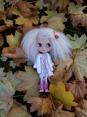 leaf and the autumn leaves...1 of 3