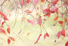 I feel like dancing, with the autumn leaves! (gregor H) Tags: autumn motion fall nature leaves dance movement relaxing redleaves crinkle infinestyle alemdagqualityonlyclub