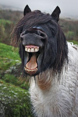 フリー画像| 動物写真| 哺乳類| 馬/ウマ| 歌う|       フリー素材|