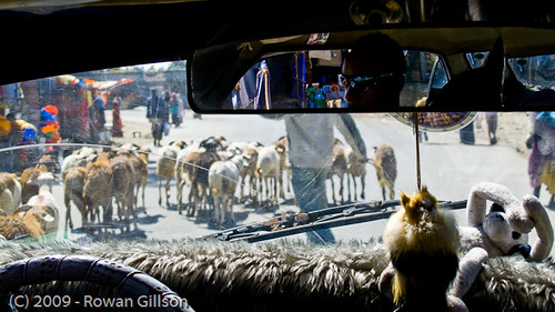 Herds of goats being shepherded through the streets is a common sight throughout Addis Ababa.