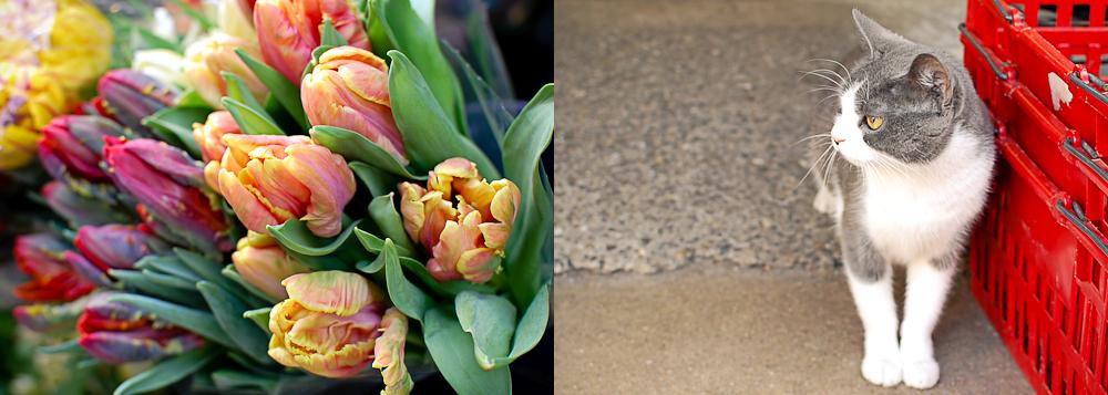 Tulips & Cat