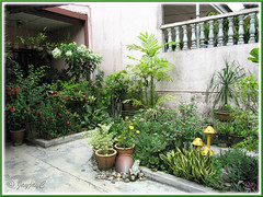 Our tropical frontyard garden in November 2009 with flowering annuals and perennials