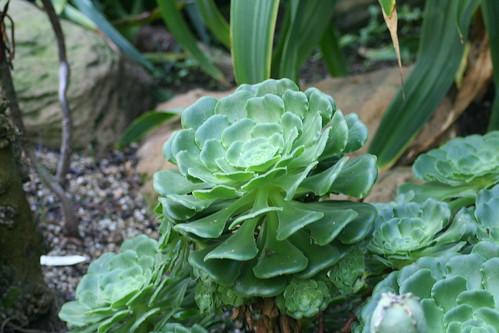 20090919 Edinburgh 20 Royal Botanic Garden 400