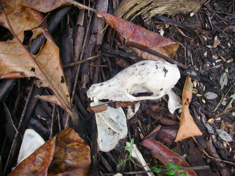 Skull of Sorts