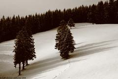 2009_Winter_Preview_009 (colin.merkert) Tags: schnee winter summer snow black colin forest canon germany deutschland eos urlaub himmel berge aussicht freiburg landschaft sonne schatten schwarzwald 2009 schauinsland merkert 1000d flickraward5