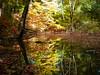 Automn in Toronto (khoosh) Tags: trees toronto reflection fall water colors automn khashayar